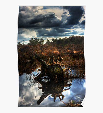 irish bog wood Poster