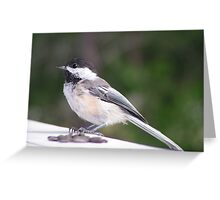 Black Cap Chikadee Greeting Card