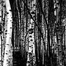 a remarkable stand of trees by gail anderson