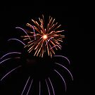 Fireworks by Diane Petker