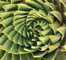 Spiral succulent by ceejaygraham