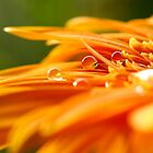 orange drops by lensbaby