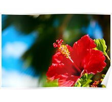 Hawaii  Red Hibiscus Poster
