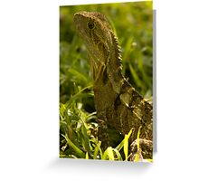 Physignathus lesueurii Revisit  Greeting Card