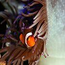 Where's Nemo? by tracyleephoto