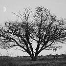 Moonrise by Mishka Góra