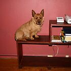 Telephone Table with Dog by styles