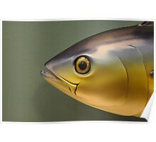 Fish in Profile Poster