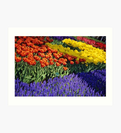 Keukenhof Garden Abstract Art Print