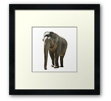 indian elephant on white Framed Print