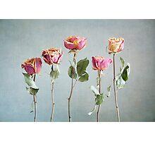 Dried Beauties Photographic Print