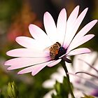 colect my nectar by kostas tsipos