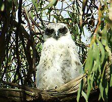 Powerful Owl Family 8 by Biggzie