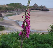Digitalis & Dragons Tail by Tess Barnes