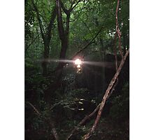 The Old Forest Photographic Print
