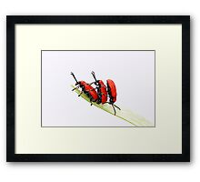 Twos company three is confusing! Framed Print