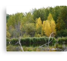 Fall Beaver Pond   Canvas Print
