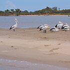 Pelican Island by Liz Worth