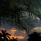 Sunrays through the Palms by Virginia N. Fred