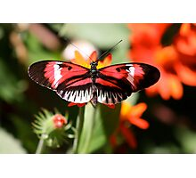 The Piano Butterfly Photographic Print