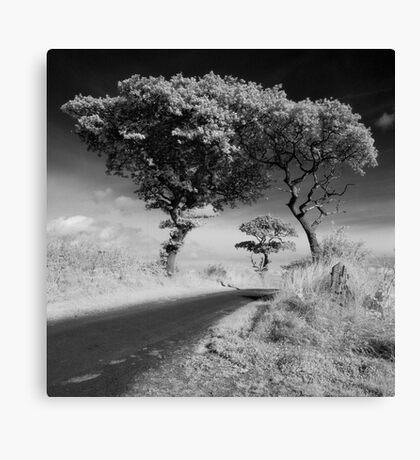 Newton Trees SFX Canvas Print