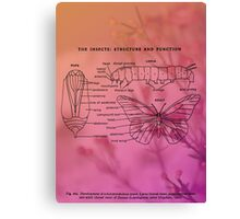 Butterfly Cycle Chart Canvas Print