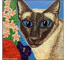 Siamese Cat With Bush Flowers Photographic Print