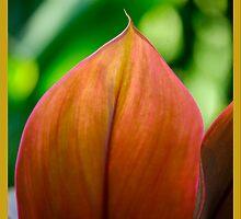 Ti Leaves by linaji