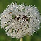 Chandelier Dandelion by BigD