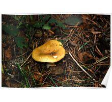 Fungi 14 Poster