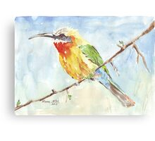 Whitefronted Bee-eater (Merops bullockoides) Canvas Print