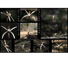 Spider Orchid - Mallee Scrub - Monarto - South Australia Photographic Print