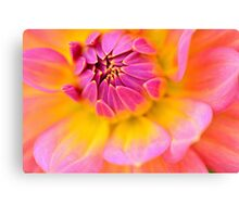 the pink embrace  Canvas Print