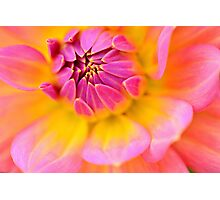 the pink embrace  Photographic Print