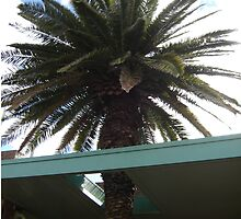 Roof Palm by KazM