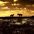 Ponies at Greenham Common  at Sunset. by Samantha Higgs
