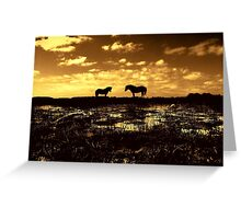 Ponies at Greenham Common  at Sunset. Greeting Card