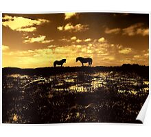 Ponies at Greenham Common  at Sunset. Poster