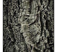 Bark by elizart