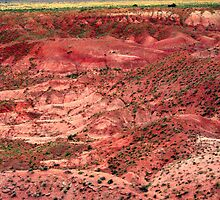 Painted Desert Landscape by Laurie Puglia