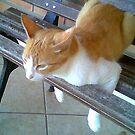 Thinking cat by Marilia Martin