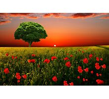 The Little green tree  Photographic Print