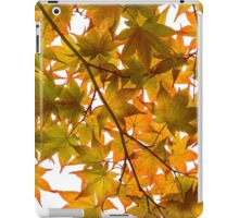 Under the Japanese Maple - Impressions Of Fall iPad Case/Skin