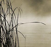 Misty Lake by Adam Spence