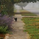 Black Cat in the fog by Christine King