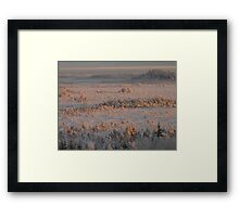 Winterview to swamp of Torronsuo Framed Print