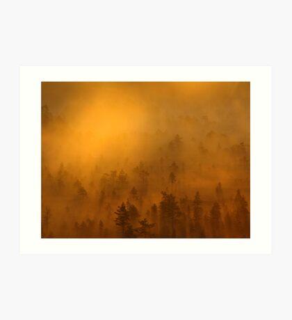 'Morning on the Torronsuo swamp' Art Print