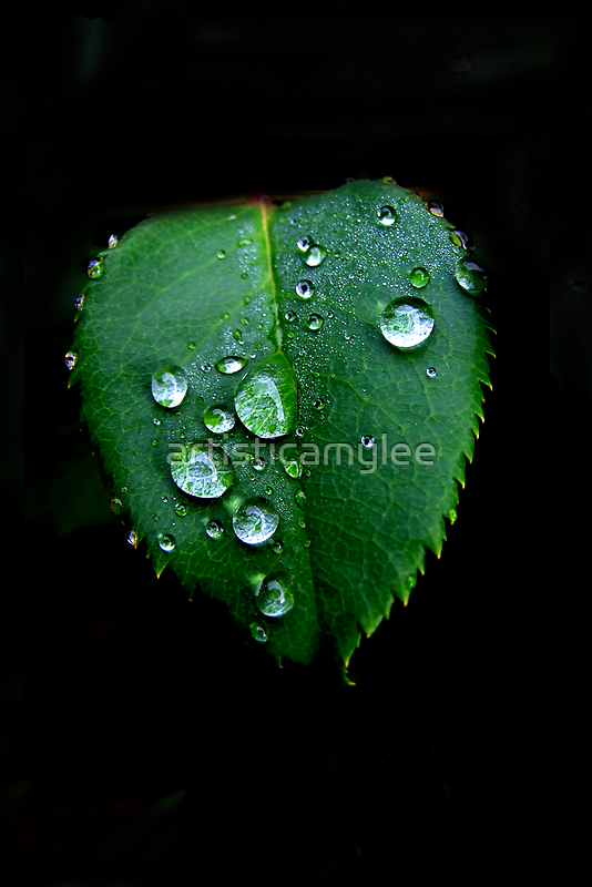 RainDrops  by Amy-lee Foley