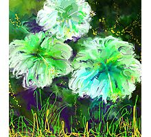 Green Hibiscus/homage to O'Keefe Photographic Print