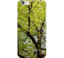 trees landscape iPhone Case/Skin